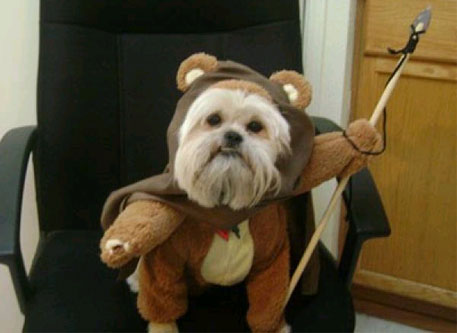 A rather realistic dog Ewok.