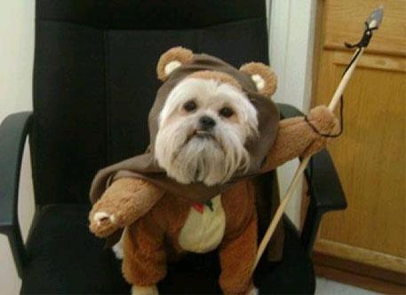 A rather realistic dog Ewok.
